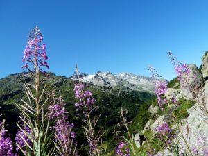 Paesaggio svizzero in primavera
